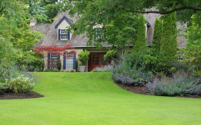 Maintain a Healthy Lawn Naturally During the Summer
